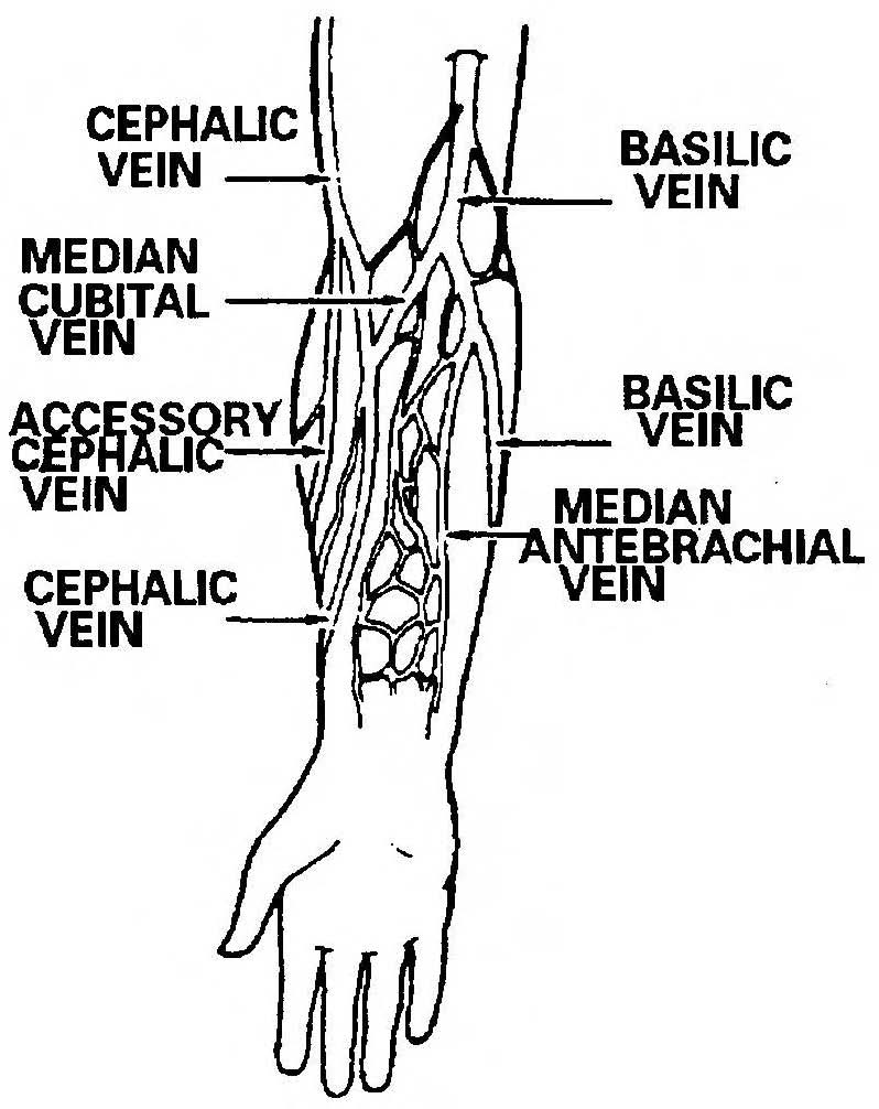 Arm Veins Diagram http://nursing411.org/Courses/MD0553_Intravenous_Infusions/2-03_Intravenous_Infusions.html