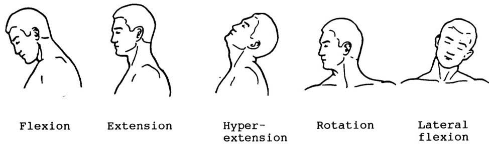 Flexion And Extension Of Neck
