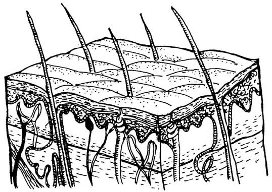 free integumentary system coloring pages - photo#27