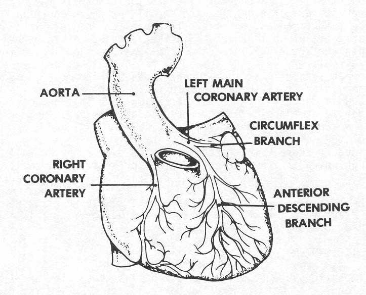 1 4 Blood And Nerve Supply Of The Heart
